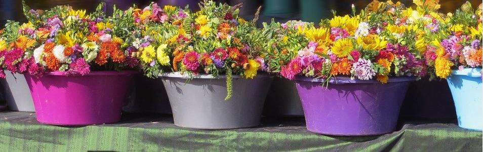 Tontöpfe bemalen und bepflanzten